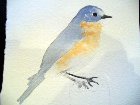 Watercolor Tutorial Bluebird Painting