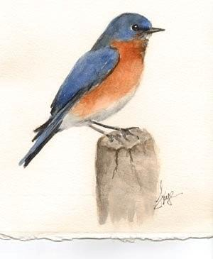 Watercolor Bluebird Lesson