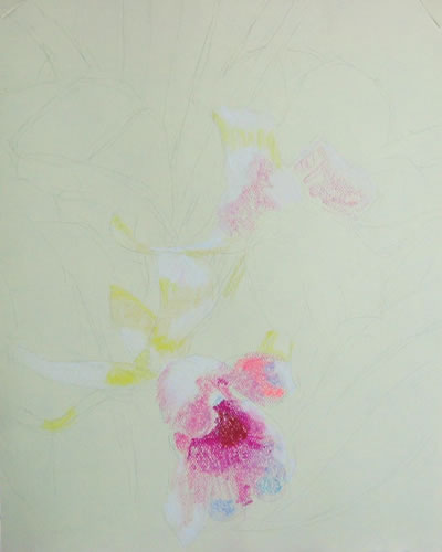 pastel drawing technique orchid 1