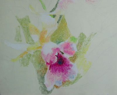 pastel drawing tutorial orchid 2