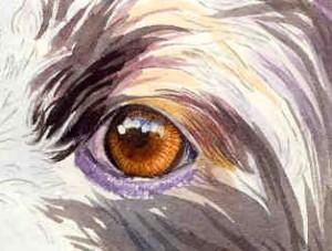 sketch-eyes2