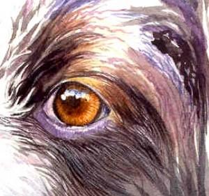 sketch-eyes3