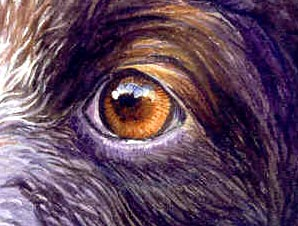 sketch-eyes4