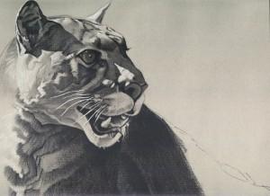 cougar 5