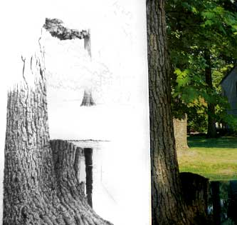 How to Draw Trees with Pen and Ink Image 2