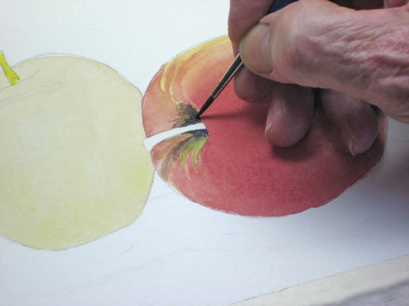 watercolor demonstration 7
