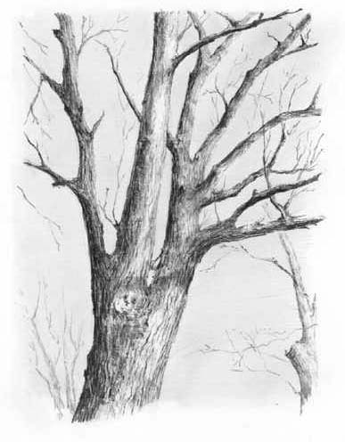 how to draw trees step by step