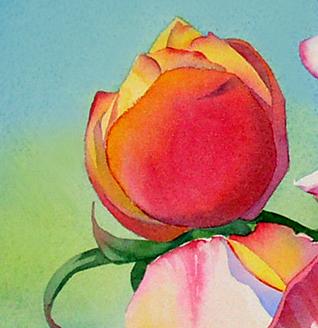aquarela demonstração rosas 11