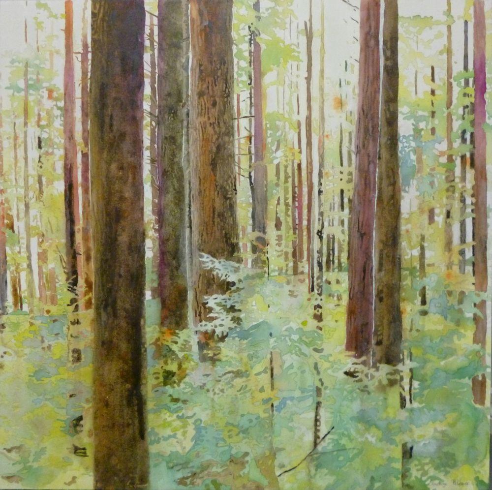 birch bark wallpaper canada