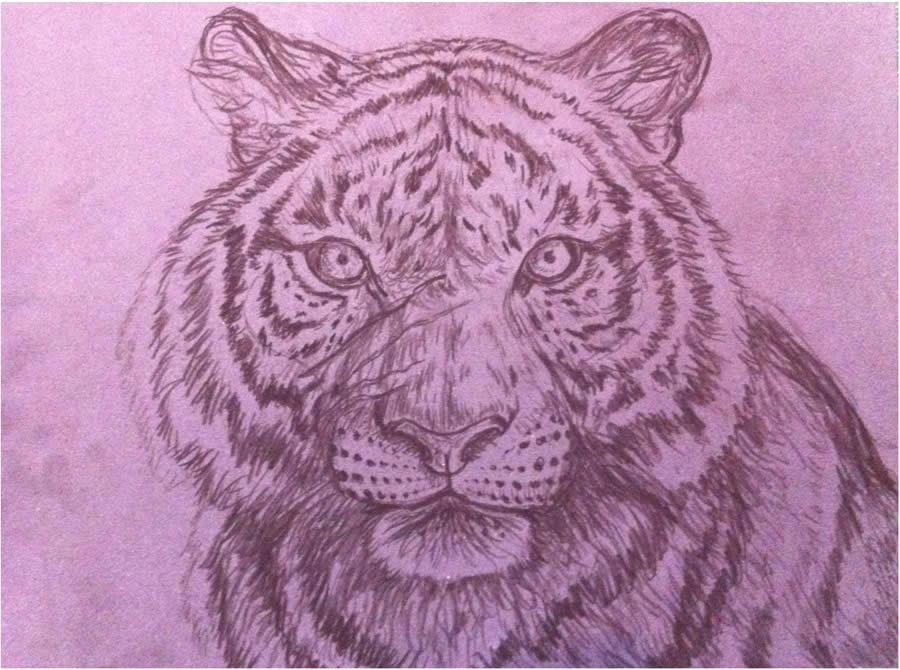tiger-painting-3