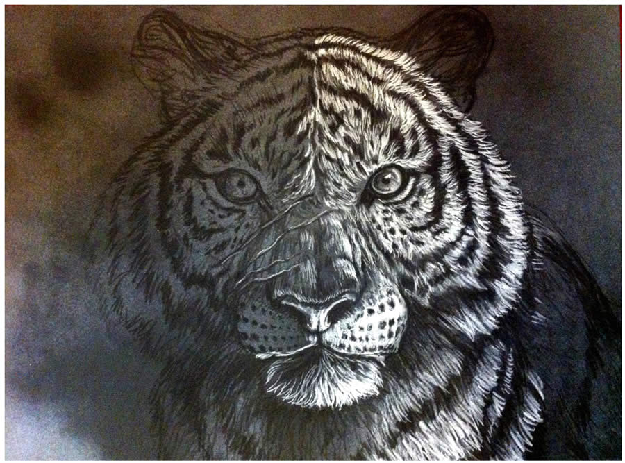 tiger pastel drawing 5