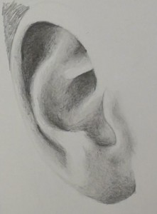 12-lobe-tragis-dark-shading-added