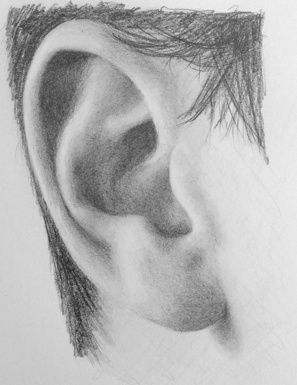 How to Draw a Realistic Ear - Step by Step Drawing ... Ear Sketches