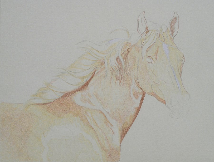 lewis-carrie-palomino-filly-07