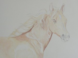 lewis-carrie-palomino-filly-08