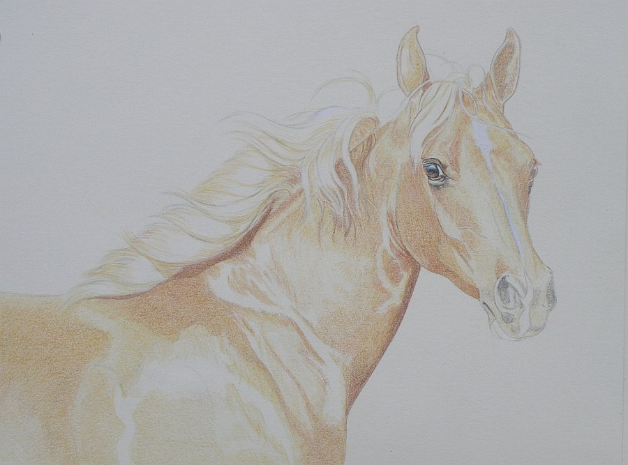 lewis-carrie-palomino-filly-09