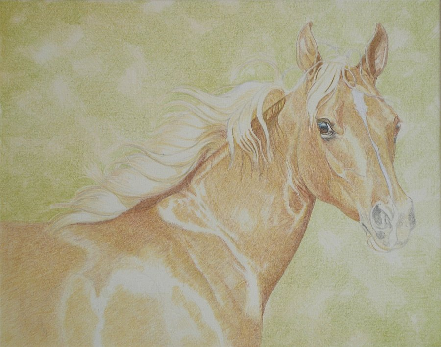 lewis-carrie-palomino-filly-11