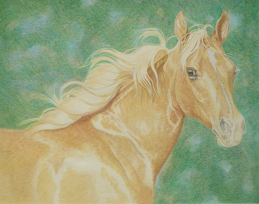 lewis-carrie-palomino-filly-15