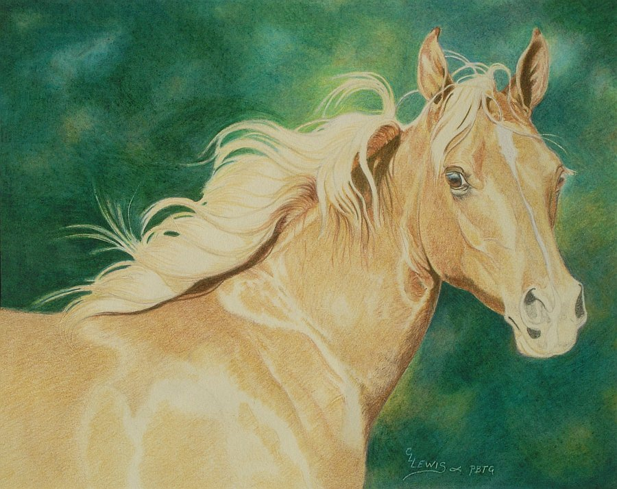 lewis-carrie-palomino-filly-20