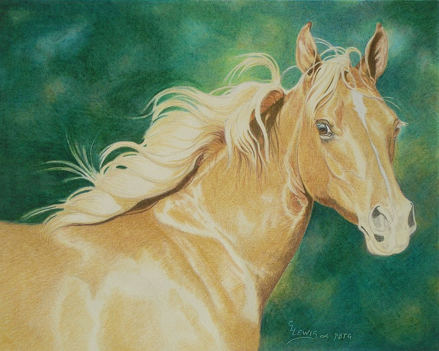 Colored Pencil Drawing Demonstration Palomino Arabian Filly