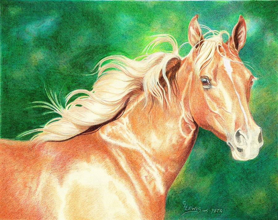 lewis-carrie-palomino-filly-24